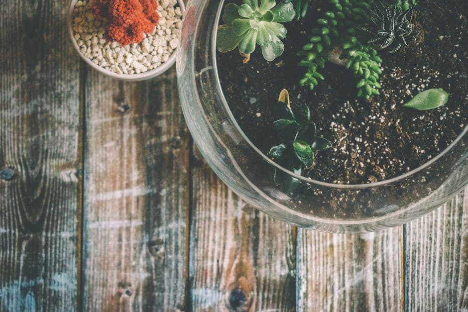 The Importance of Attending the Terrarium Workshops Singapore